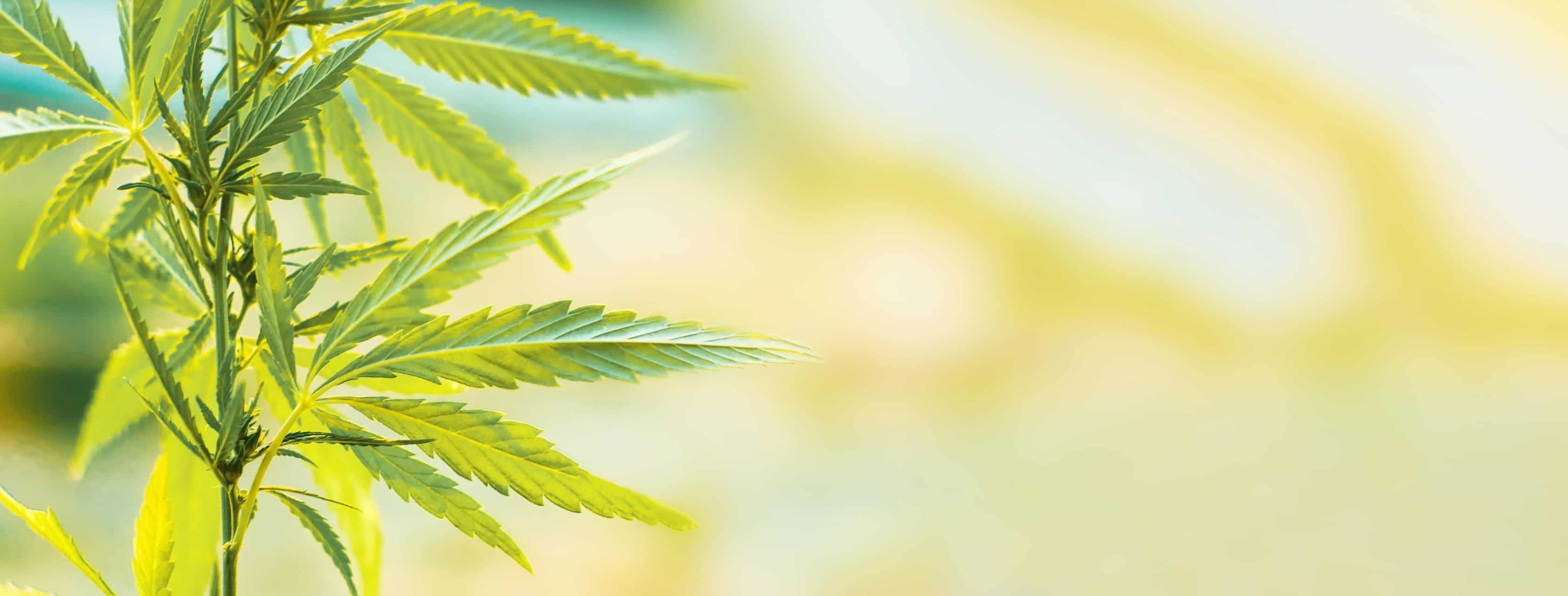 Hemp-Derived CBD: Choosing the Product That's Right for You